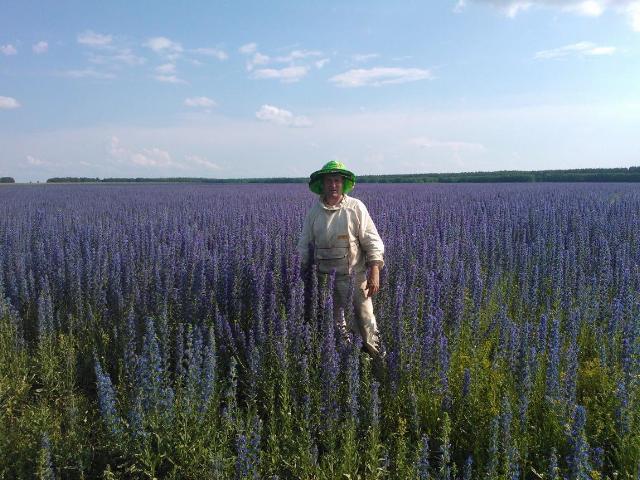 Фото пчеловода на цветущем поле