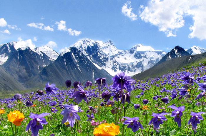 Фото пейзажа алтайских гор