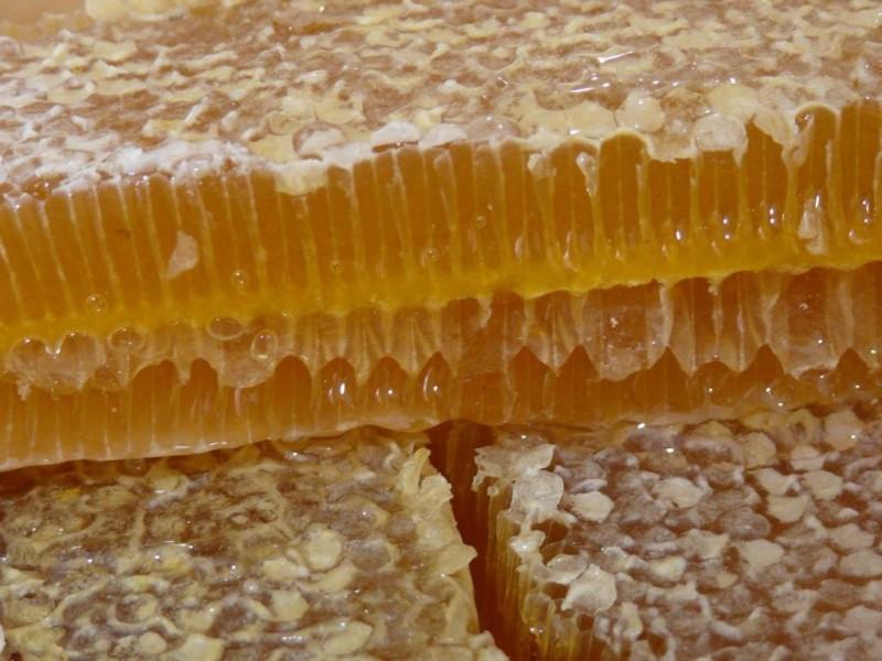 Фото сот башкирского меда