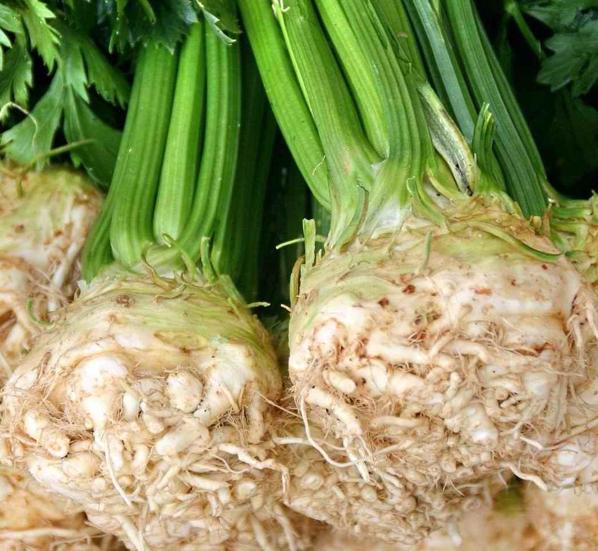 Фото корнеплодов сельдерея с черешками и зеленью