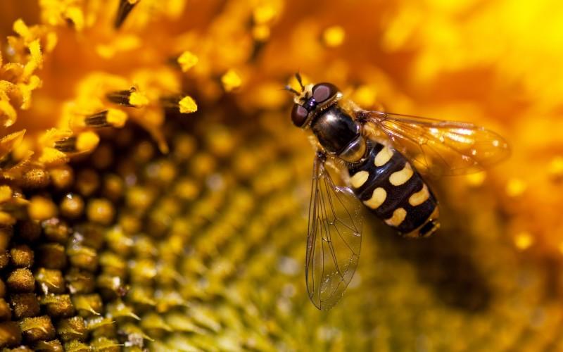 Способны ли осы давать мед и чем они полезны?