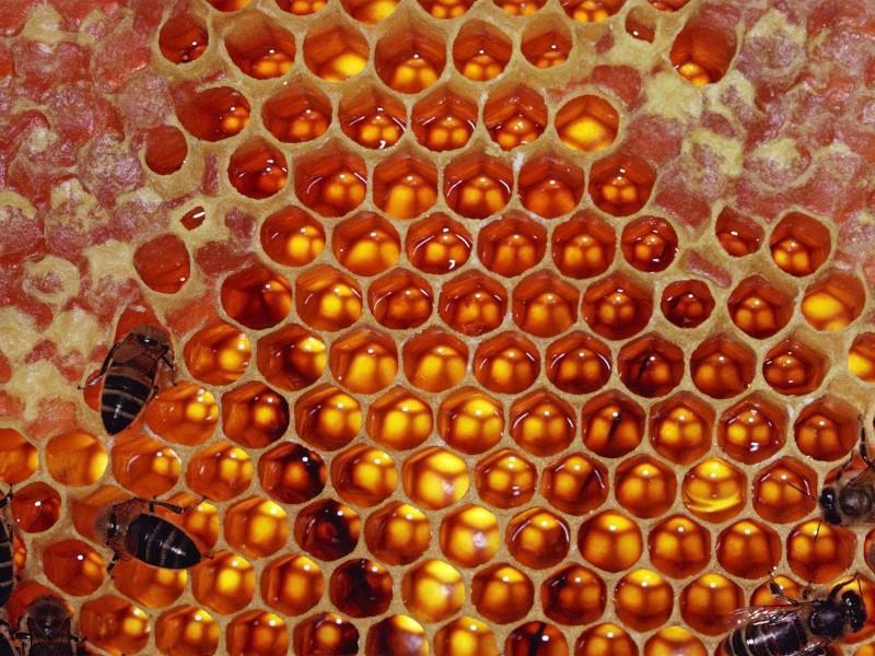 Фото пчел в сотах