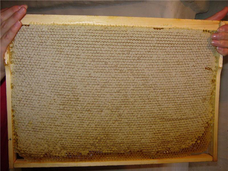 Фото рамки, полной пчелиным продуктом