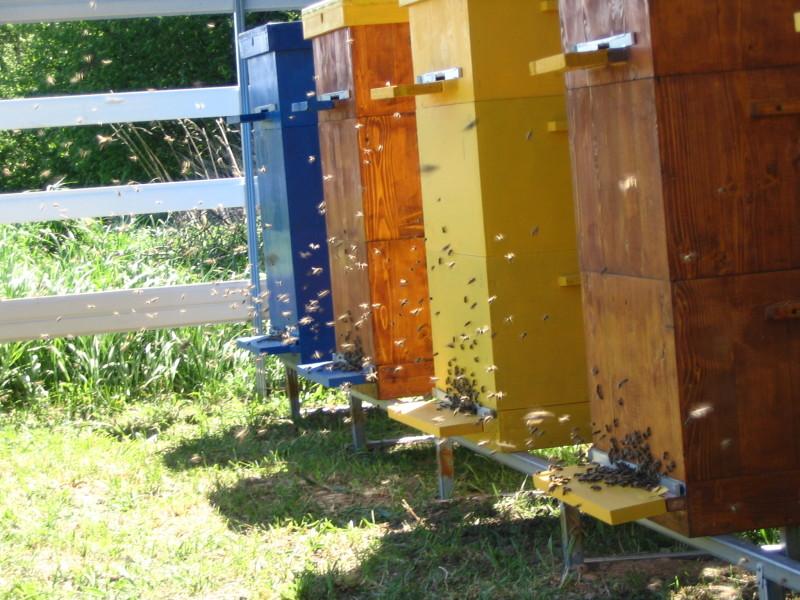 Фото пчел возле ульев