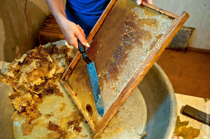 Сколько меда можно получить с одного улья?