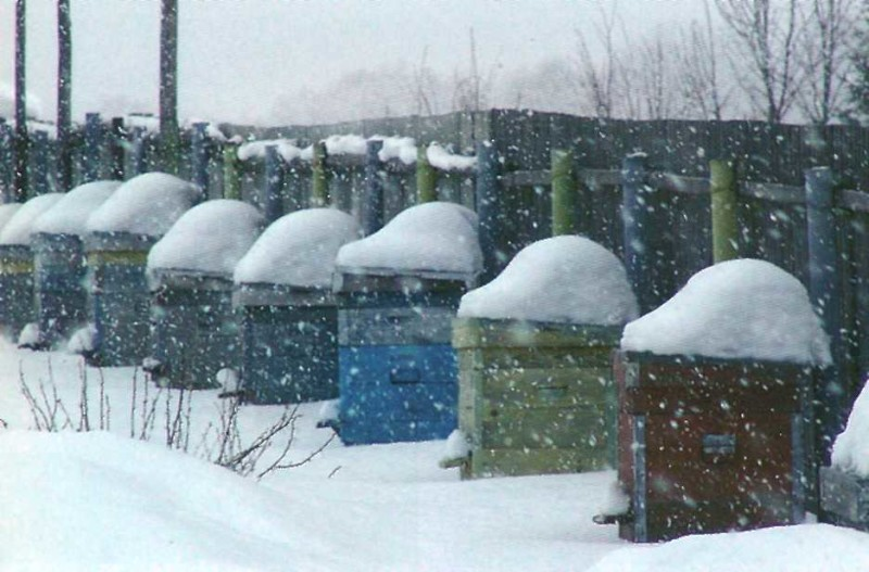 Фото ульев в снегу