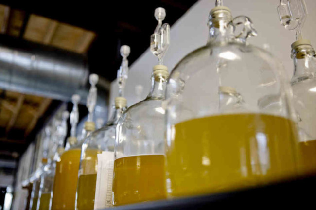 Медовуха с водкой в больших бутылках