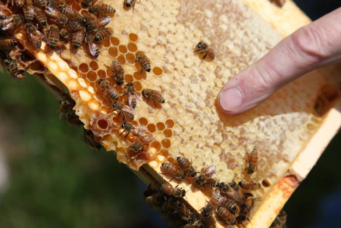 Как приготовить забрусную медовуху?