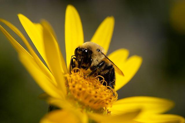 Пчела, сидящая на цветке