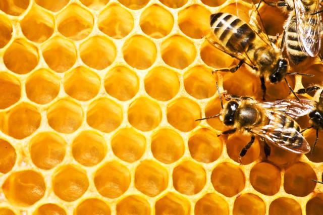 Медоносные пчёлы на фоне сотов