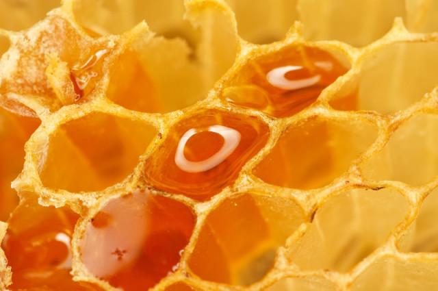 Мёд в сотах крупным планом