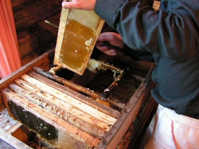 Правильная вторая откачка меда — залог отличного урожая нектара пчел!