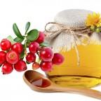Брусника и мед на белом фоне