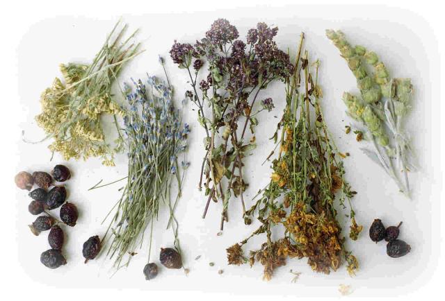 Сбор сушеных лекарственных трав