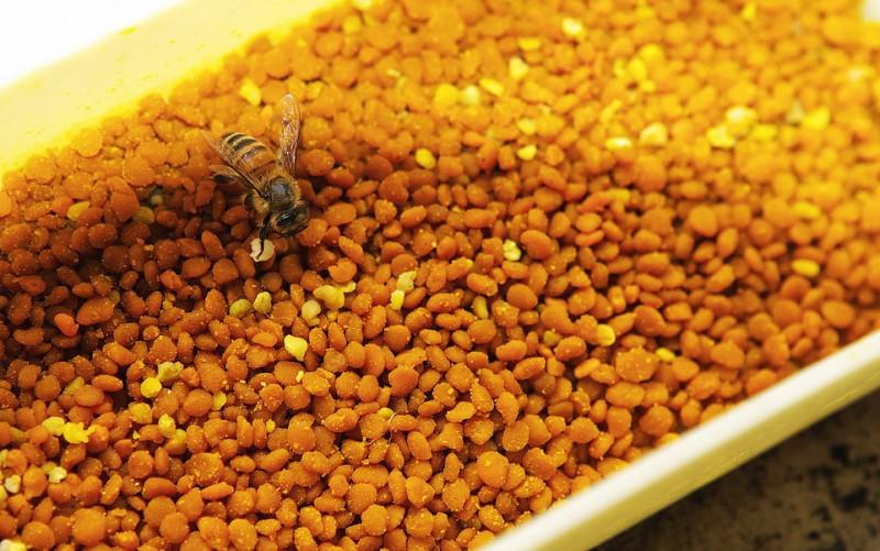 Пчела на своих обножках