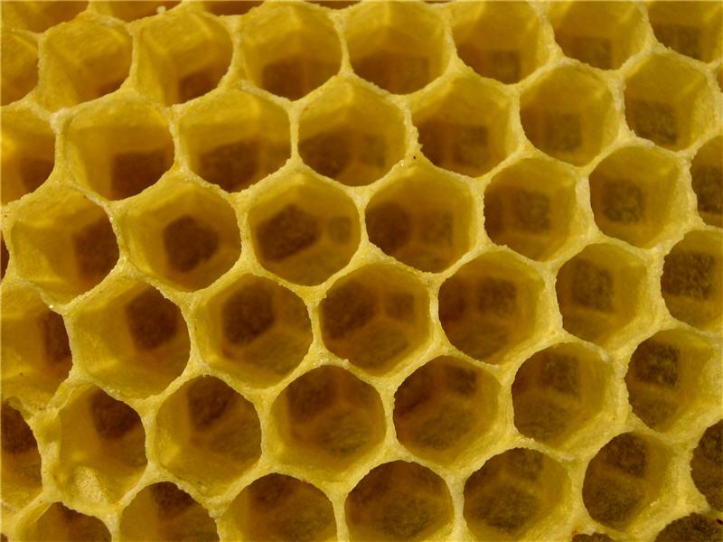 Пустые пчелиные соты крупным планом