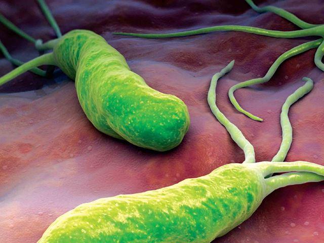Бактерия хеликобактер увеличенное изображение