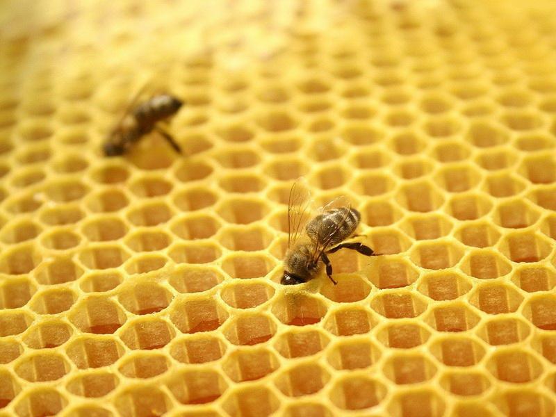 Пчелиный воск — уникальный продукт в домашней аптечке