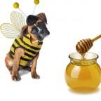 Собака в костюме пчелы на белом фоне