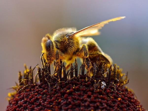 Лечимся мазью на основе пчелиного яда: как это работает?