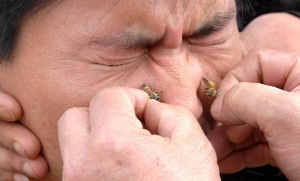 Процесс ужаления пчелиным ядом