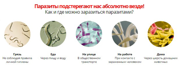 Как и где можно заразиться паразитами