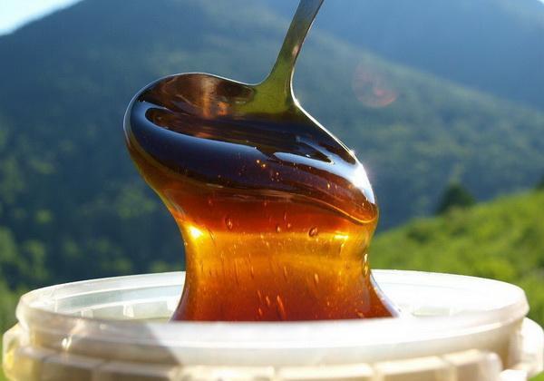 Свойства и целебные особенности меда из гречихи
