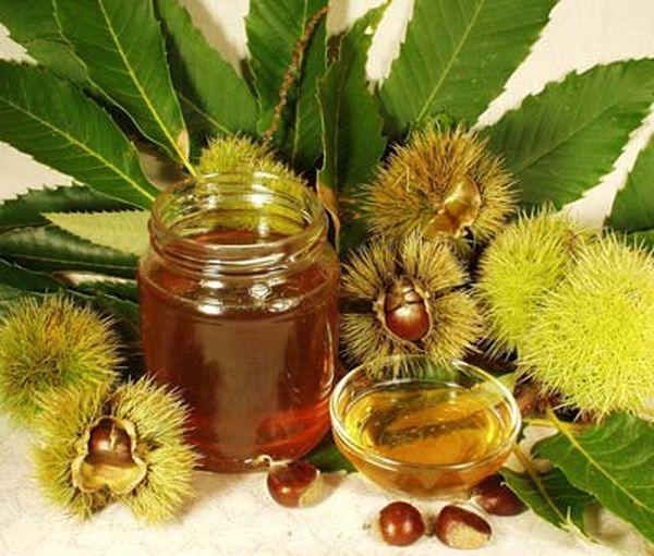 Свойства и целебный эффект мёда из каштана