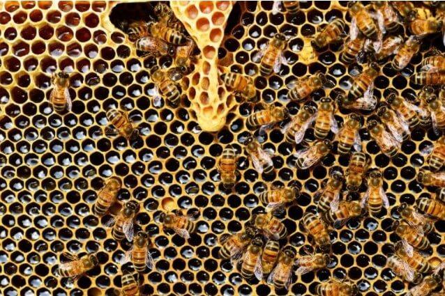 10 интересных фактов о пчелах