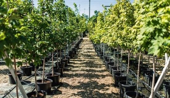 Сажайте и поддерживайте новые деревья