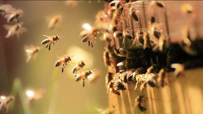Паразиты и вредители медоносных пчёл