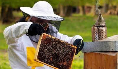 Руководство по поиску работы в пчеловодческом бизнесе
